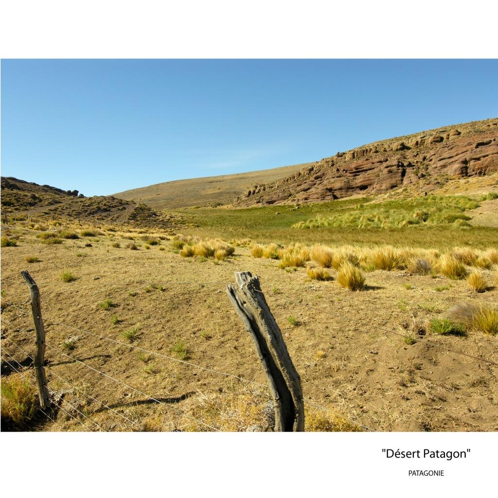 desert patagon
